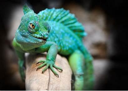 Exotic Animals Pets Should Animal