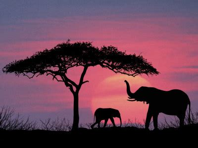 elephant silhouette sunset painting silhouette of elephants and tree photographic print by
