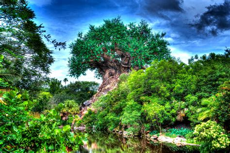 Disney Animal Kingdom Wallpaper - tree of wallpapers atdisneyagain