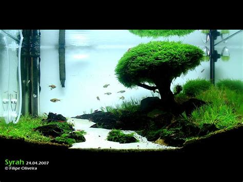 iwagumi aquascape iwagumi aquascaping 4 fish