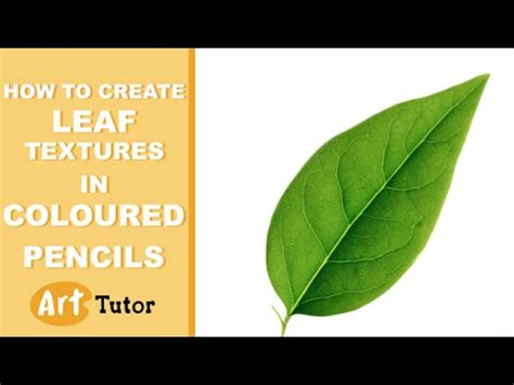 How To Create A Leaf Texture In Coloured Pencils Youtube
