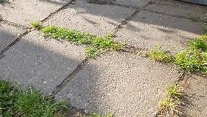 Unkraut Zwischen Steinen : es geht auch sch ner fugenbepflanzung alter trittsteine ~ Michelbontemps.com Haus und Dekorationen