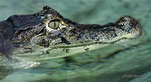Break comcs: Reptiles HD Wallpapers