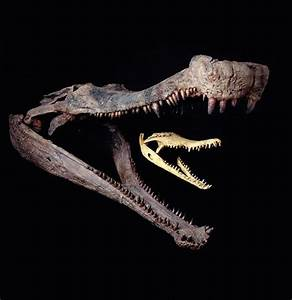 67 best Prehistoric crocodilians images on Pinterest ...