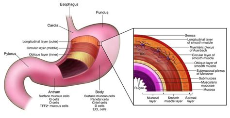 symptoms ia mast cell diseases international copy