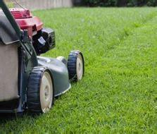 Rollrasen Rasenpflege