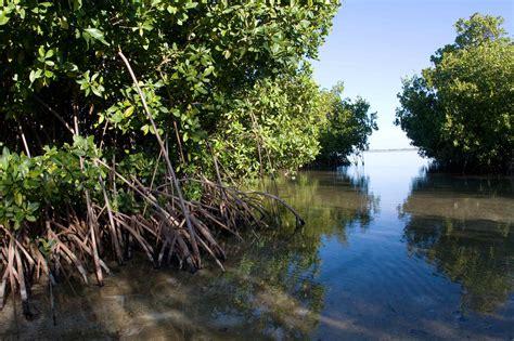 Launch of New UNU-INWEH Mangroves Training Course! - UNU-INWEH