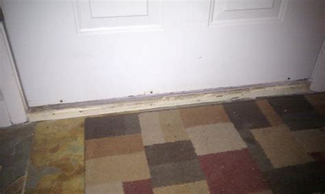 weather stripping bottom of door weatherstripping at bottom of door doityourself