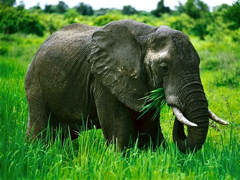 elephant cuisine e is for elephants january 2013