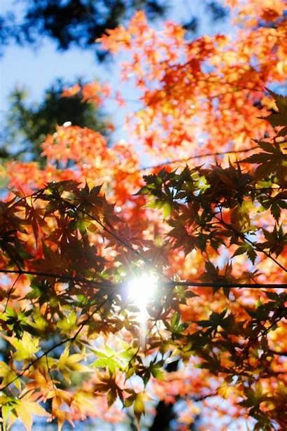 Foliage Sunlight Autumn Trees 4s Parallax Iphone