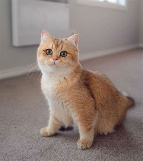 gambar mewarnai kucing cantik