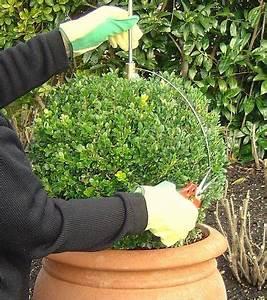 Buchsbaum Schablone Kaufen : buchsbaum schablone zum einfachen formschnitt von ~ Watch28wear.com Haus und Dekorationen