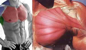 6 Insider Tips To Boost Your Chest Muscles For Big Gains