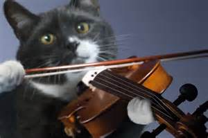 cat entertainment cat s entertainment musical moggies make up hilarious cat