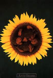 Anne Geddes Sunflower Babies