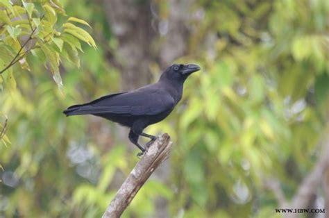 Mengenal ciri dan jenis burung langka yang ada di dunia. Nama Nama Hewan Langka Beserta Gambarnya | Nama-Nama Hewan