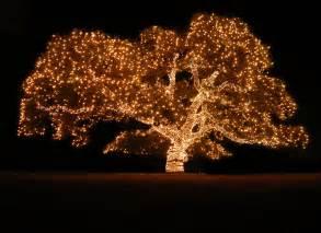 2015 piedmont avenue tree lighting stroll oakland funcheap