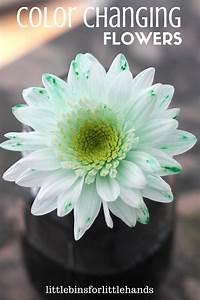 color changing flower science experiment stem
