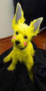 A wild Pikachu appears - 9GAG