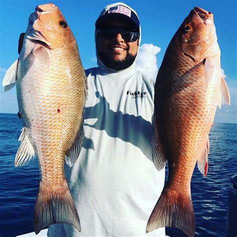 snapper mangrove fishing clearwater gulf