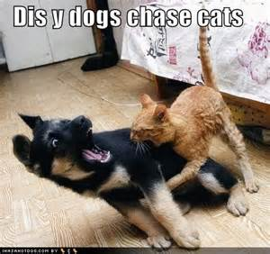 Why Do Cats Scratch Carpet by All Photos Gallery Funny Dogs And Cats Funny Cats Hd