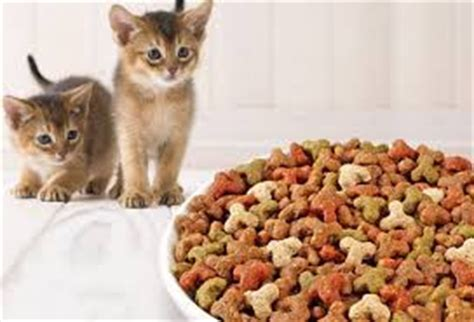 merk makanan kucing  bagus  harga makanan kucing