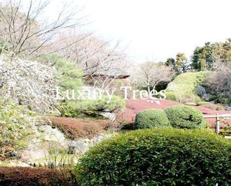 Japanischer Garten Graz by Japanische G 228 Rten Und Gartengestaltung 187 Luxurytrees