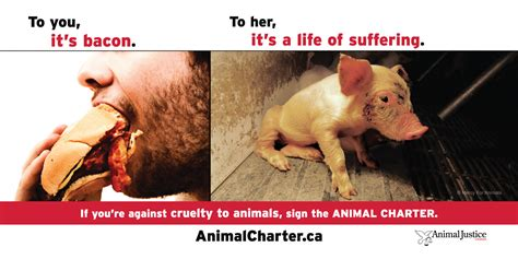 animal justice animal justice canada launches largest