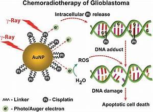 U0026 39 Trojan Horse U0026 39  Gold Nanoparticles Treatment Could Beat
