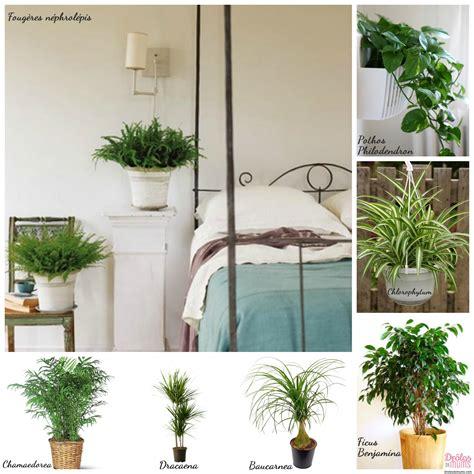 plante dans une chambre quelles plantes choisir pour dépolluer ma maison et les