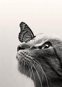 Photography - Black and White   Cat Butterfly by Dorien ...