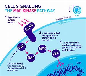 Our Milestones  The Discovery Of The Nras Signalling Gene