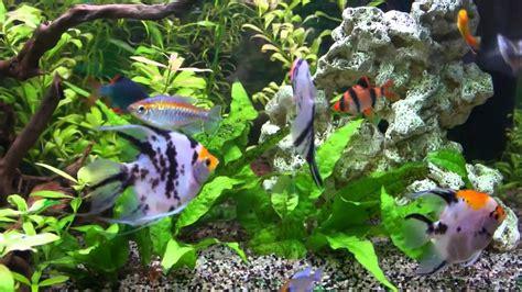 aquarium et poissons d eau douce