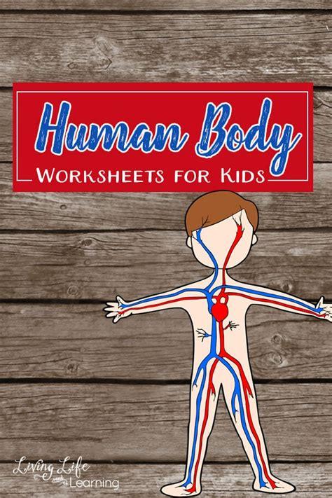 human body worksheets  kids