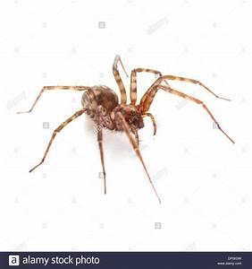 Weiße Spinne Deutschland : spider stockfotos spider bilder alamy ~ Orissabook.com Haus und Dekorationen