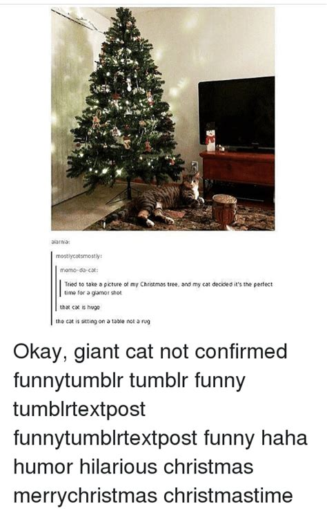 Christmas Memes Tumblr - christmas memes tumblr www pixshark com images galleries with a bite