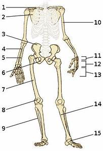 Gallery: Free Anatomy Quiz Skeleton, - Anatomy Diagram Charts