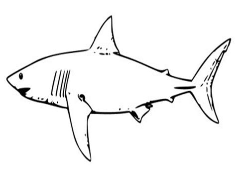 printable shark coloring pages  kids