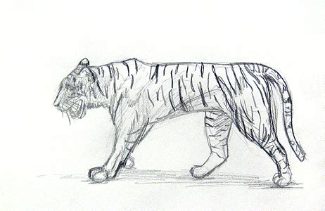 guide learn  draw animals