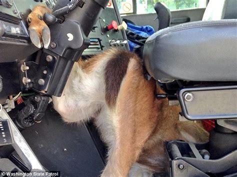 tacoma deer jumps   windshield  speeding truck