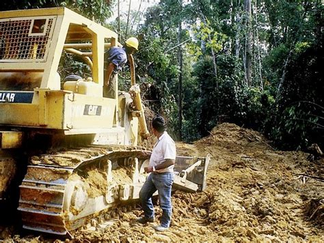 Organised crime, illegal timber and Australia's role in ...