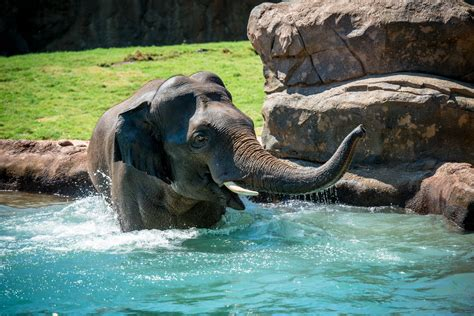 world elephant day  houston zoo