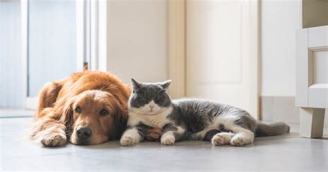 Pets best is a trusted insurer with a 9.1 out of 10 on trustpilot and an a+ from the better business bureau. Find the Best Pet Insurance - Pet Insurance Guide