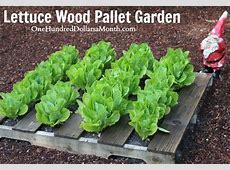 Pallet Gardening 101 Creating a Pallet Garden One