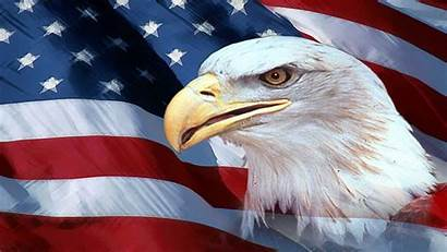 Eagle 4k American Desktop Background Wallpapers Resolution