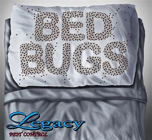 how to get rid of bed bugs ogden ut pest control and With bed bugs pillows getting rid