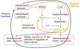 Protein Metabolism PowerPoint