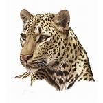 Leopard Freepngimg Icon