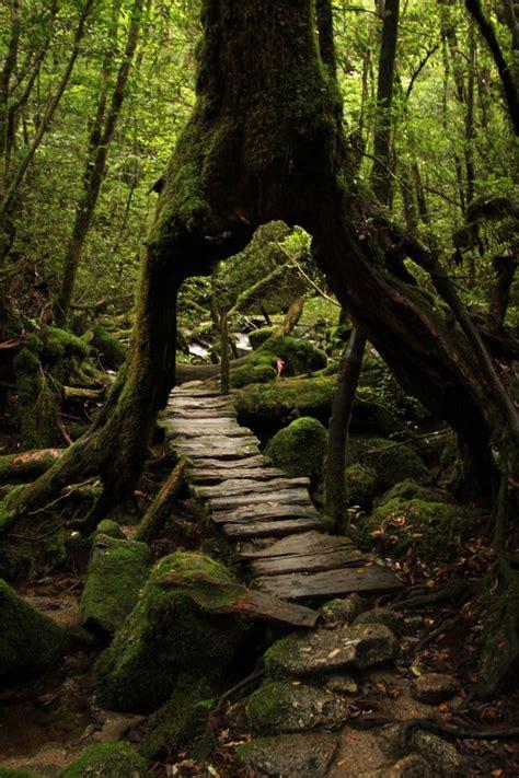yakushima ideas  pinterest kagoshima kyoto