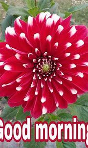 Top 50 Good Morning Flowers Images Pictures HD Photos Free ...